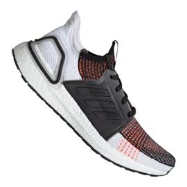 Cipele za trčanje adidas UltraBoost 19 m M G27519 šaren